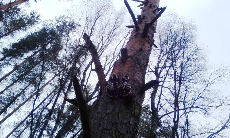 Кеды на дереве