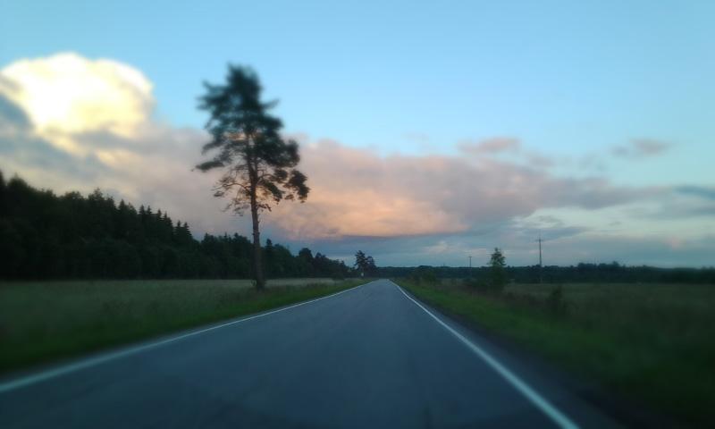 Сосна на шоссе