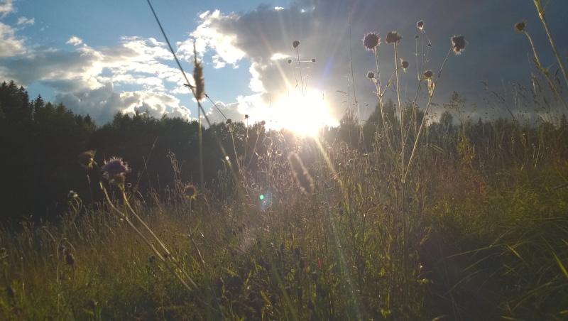 Закат на поляне