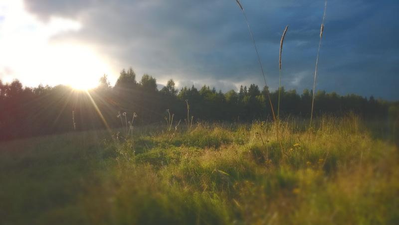 Солнце освещает поляну