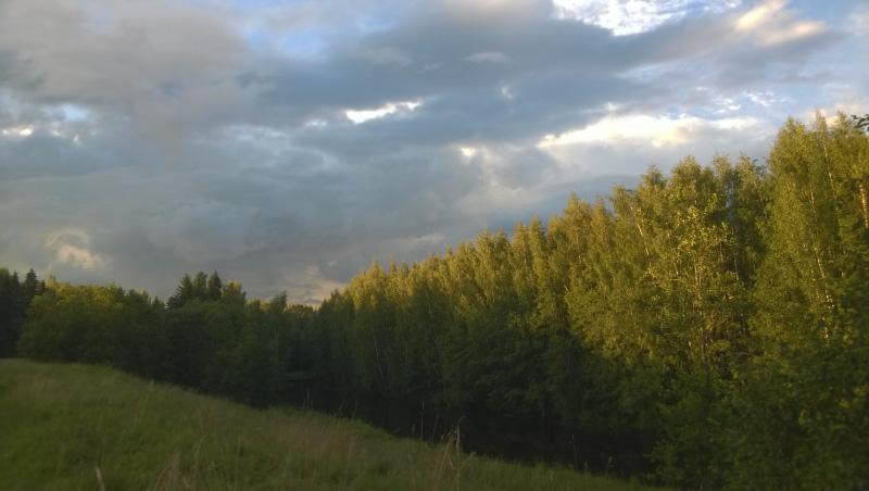 Лес вдоль реки