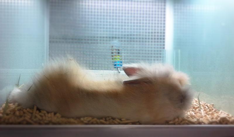 Кролик в аквариуме